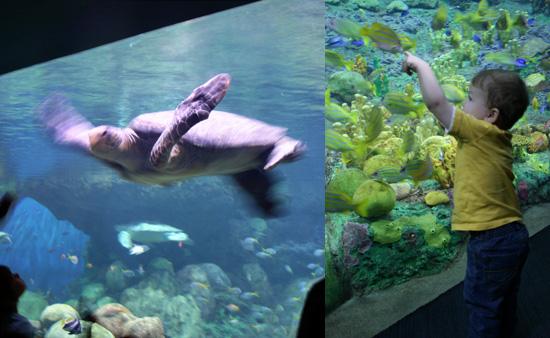Turtle Reef - Sea World San Diego