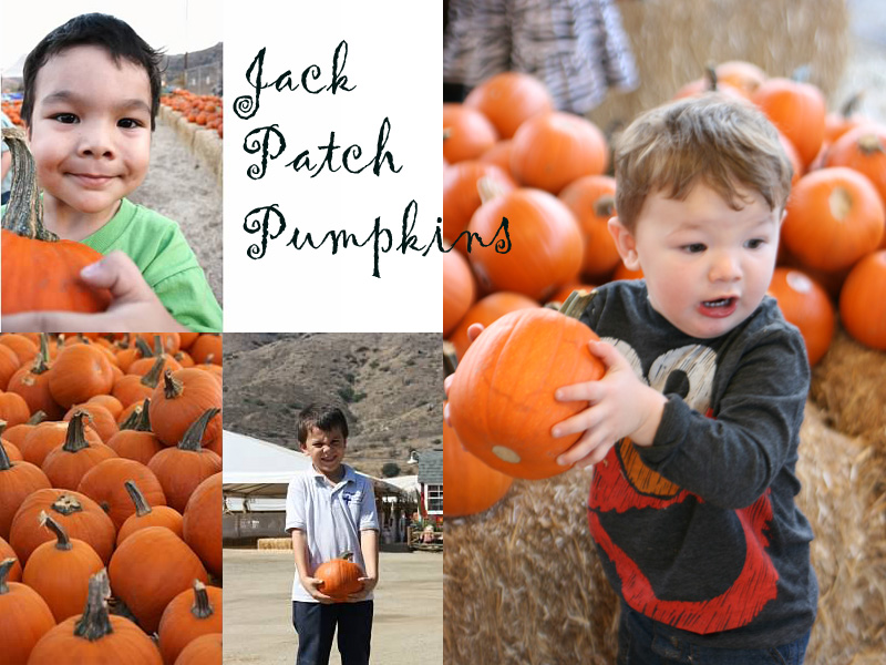 Oma's Pumpkin Patch - Lakeside CA